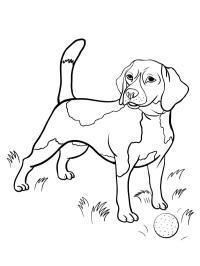 honden kleurplaten gratis kleurplaten printen