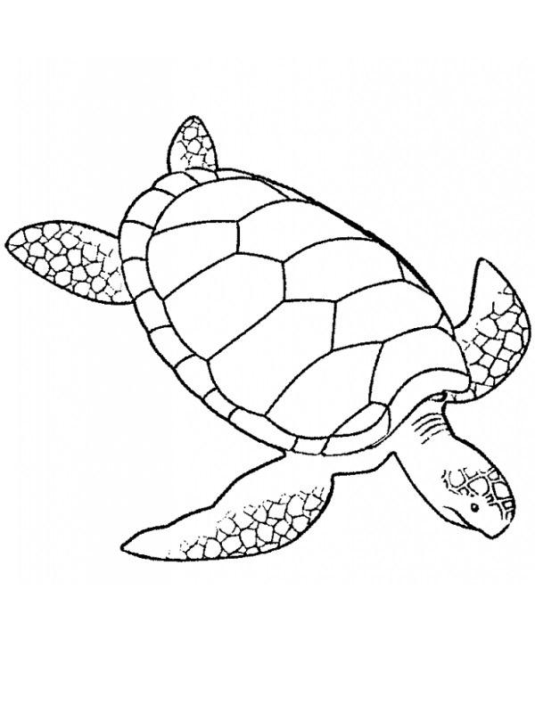 kleurplaat schildpad leukekleurplaten nl