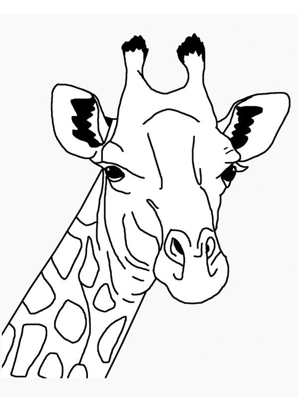 kleurplaat hoofd giraf leukekleurplaten nl