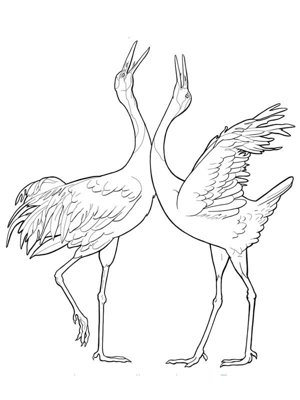 kleurplaat kraanvogels leukekleurplaten nl