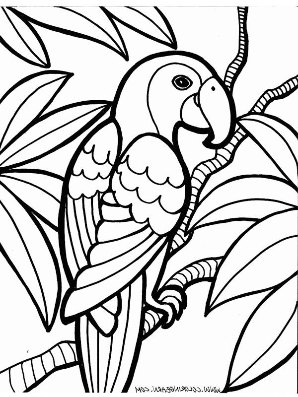 kleurplaat papegaai leukekleurplaten nl